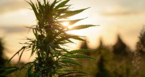 General Cannabis Corp